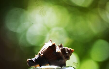 gastropod: Shell with bokeh green background Stock Photo