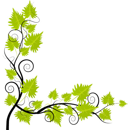 Grapevine leafs frame on white background