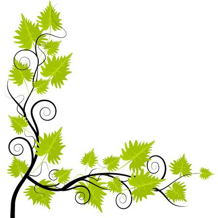 greem: Grapevine leafs frame on white background
