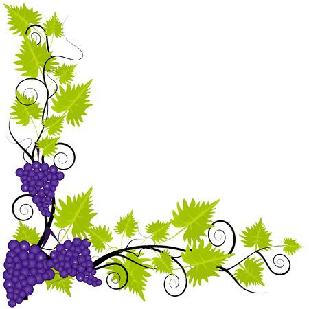 bordering: Fresh grapevine frame on white background