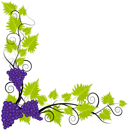 Fresh grapevine frame on white background