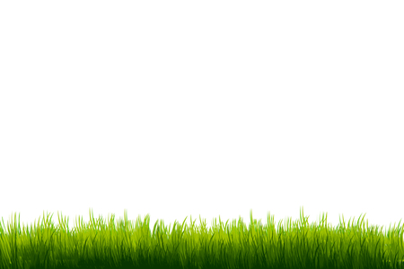 royalty free: Grass on white copy-space