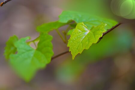 Green leafs background image