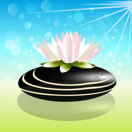 Beautiful lotus flower on zen stone background vector