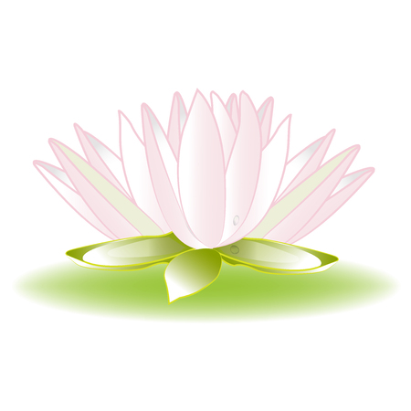 Lotus flower logo vector image icon