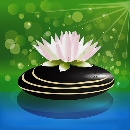 Beautiful lotus flower on zen stone background vector