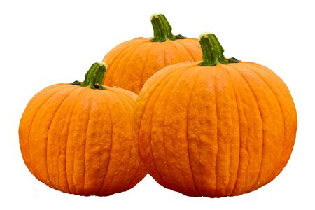 Pumpkins on white stock image