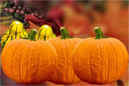 Beautiful autumn pumpkins background picture