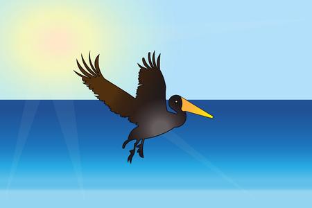 Pelican bird fly on the beach vector illustration
