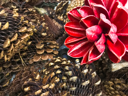 Pine cones spruces with red wood flower vintage background