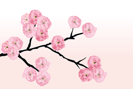 Cherry blossom flowers background template