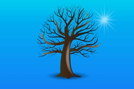 Tree branches without leafs vector image