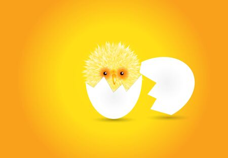 Evolution born chick vector illustration Vettoriali