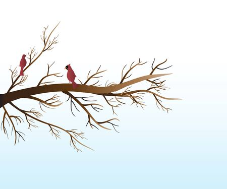 Branch tree and red birds cardinals vector background template