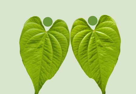 Heart shaped two leafs nature people image plant team background picture image