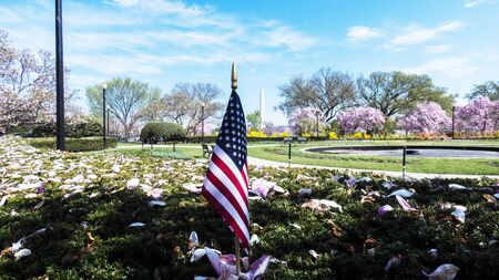 Cherry blossom and Washington Monument in Washington D.C. National Mall.