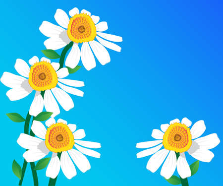Daisy flowers greetings card painted illustration artwork vector image banner template background