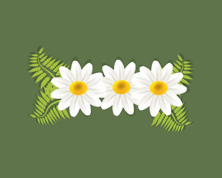 White flowers -daisy flowers greetings card holidays vector image banner template graphic design business card Illustration