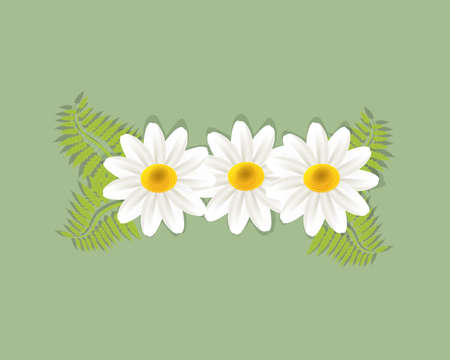 White daisy flowers garden greetings card holidays vector image banner template graphic design business card Illustration