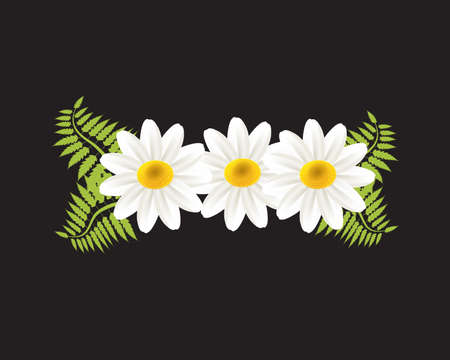 White daisy flowers chamomile greetings card holidays beautiful garden vector image banner template graphic design business card logo background Illustration
