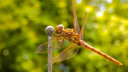 Dragonfly close up on green background picture image