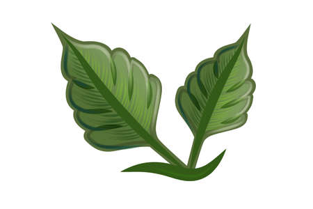 Logo leafs health nature ecology logo image design
