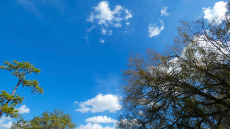 Trees beautiful blue sky in a  sunny day background picture image 写真素材