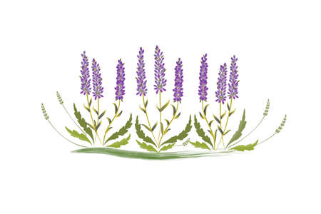 Lavender flowers hand drawn watercolor design for thank you card, greeting card or invitation vector image illustration.