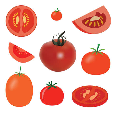 set of tomato on the white background Vector