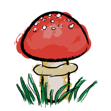 fly agaric: red toadstool in grass, white background