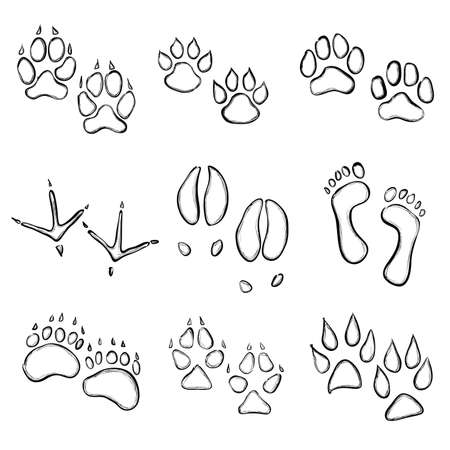 paw prints: collection of animal paw prints