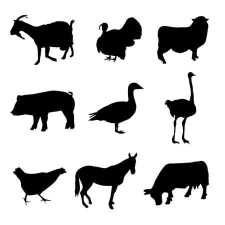 Colección de animales de granja Foto de archivo - 10997582