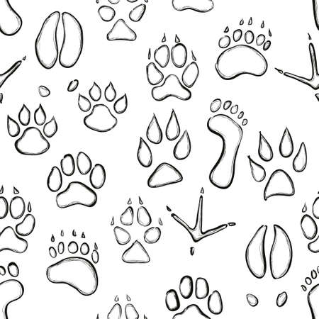 puma: modello animale zampa senza soluzione di continuit�