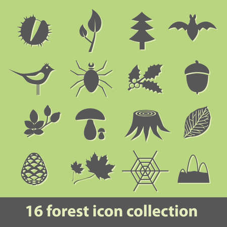 wood spider: 16 forest icon collection