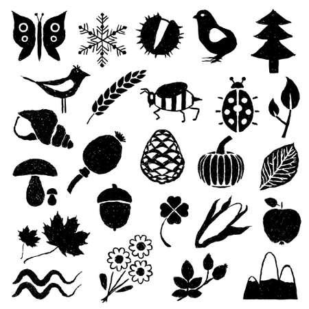 acorns: doodle nature pictures