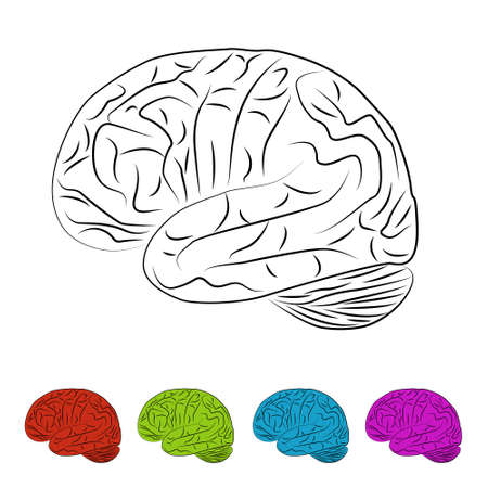 brain illustration Stock Vector - 17450604