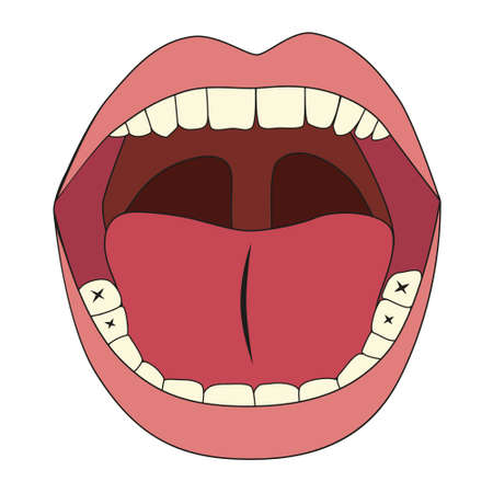 mouth illustration Stock Vector - 17450594