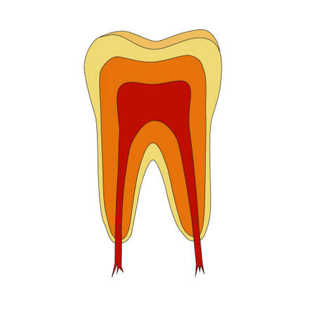 tooth illustration Stock Vector - 17450592