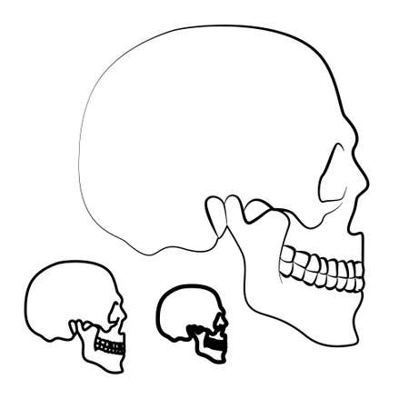 skull illustration Stock Vector - 17631306