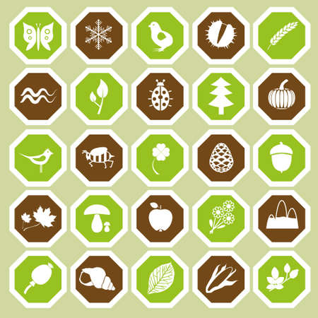 water chestnut: 25 nature icon collection