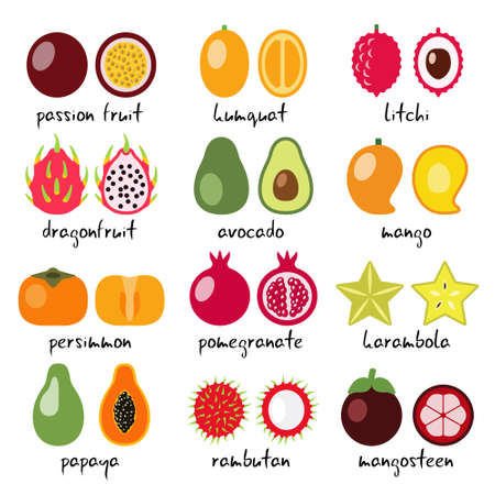 vector exotic fruits collection