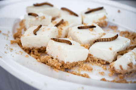 mealworm: lemon cheesecake bites with roasted mealworms