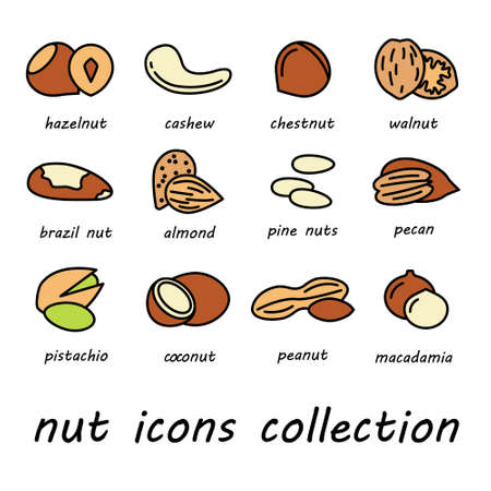 nuts: vector nut icons collection