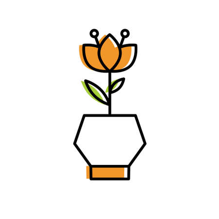 A home flower in pot isolated on plain background