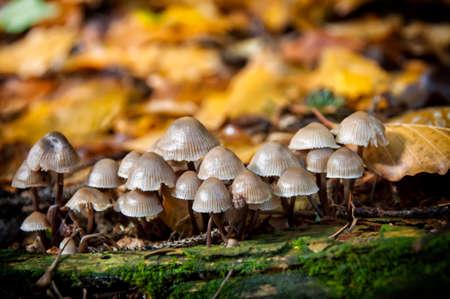close-up mushrooms in woods