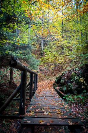 small bridge in woods Фото со стока
