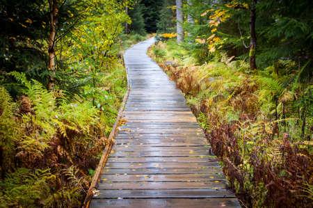 path in woods - Rejviz, Czech Republic