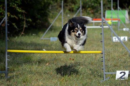 dog sports Stock fotó - 69229390
