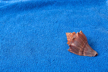 brown seashell on a blue towel background