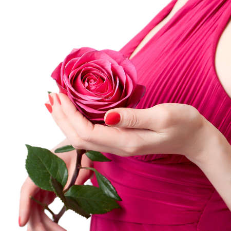 Rose in female hands at breast level on a white background photo